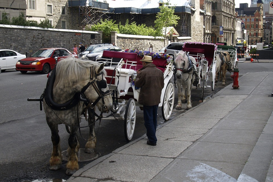 horse-buggy-54854_960_720
